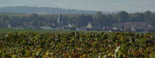 Champagne Trichet Lorain à Montbré