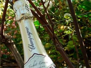 Champagne Trichet Lorain - Nos cuvées