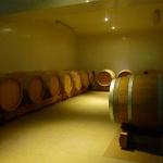 Champagne Trichet Lorain - Chai